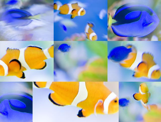 _W5D4951.熱帯魚.jpg
